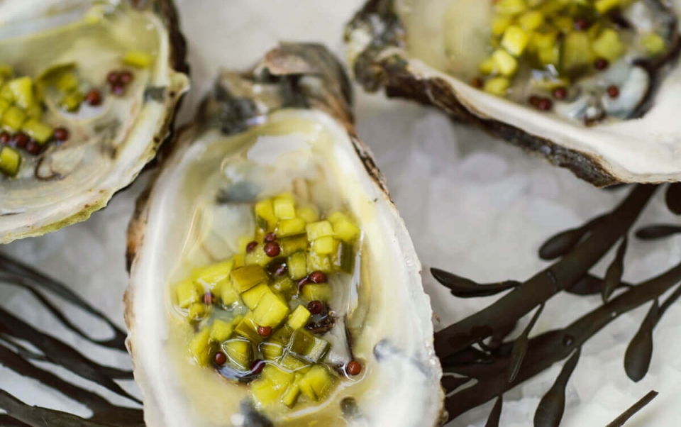 Beautifully plated oysters